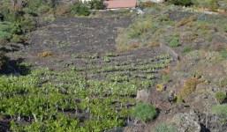 A la venta tres terrenos agrícolas en la costa de Fuencaliente