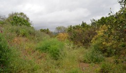 Terreno con muchas posibilidades en la zona de Botazo