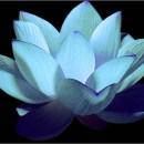 Lotus Equity Ventures