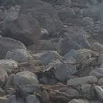 Rocks Wanted