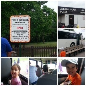 GO WILD at African Lion Safari Giveaway (ONTARIO, CANADA)