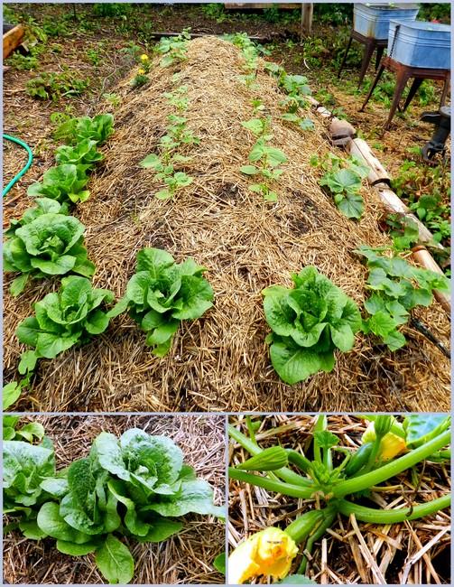 How To Hugelkultur Raised Garden Bed Start To Finish