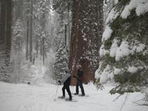 Yosemite Beginner Snowshoe Hikes