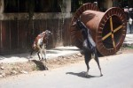 goat-fight2