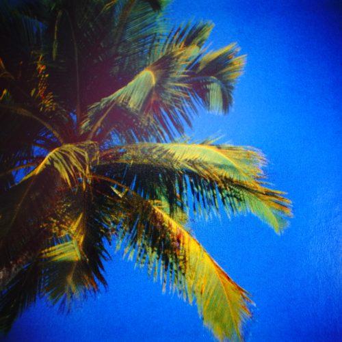Das geht mir auf die Palme: Palmöl!