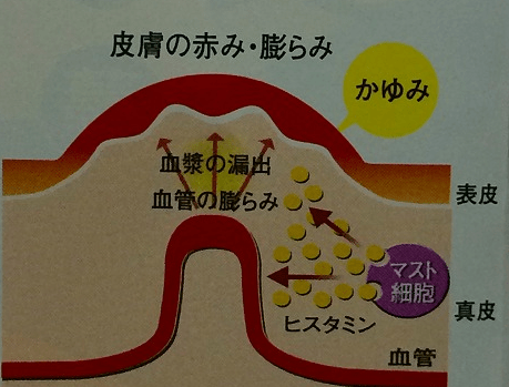 kayumi