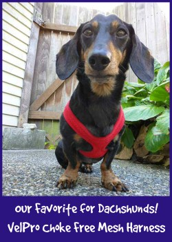 Examplary Our Velpro Choke Free Mesh Harness Harness Dogs Car Harness Dogs Degenerative Myelopathy