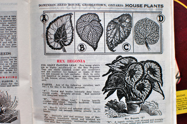 Dominion Seed Vintage Seed Catalogue