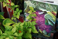 Edible Toronto Magazine