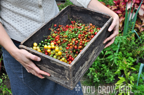 Gayla Trail with a box of freshly harvested currant tomatoes
