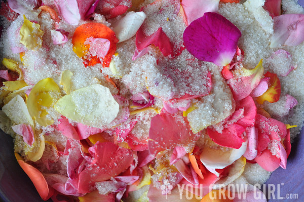 Rose Petals in Sugar