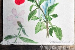 Hand Painted Vintage Botanical Postcard 1941