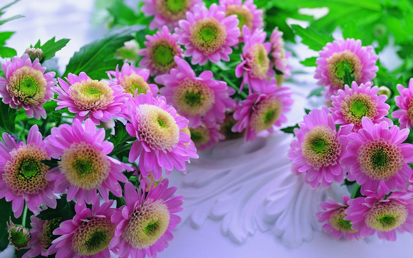 Beautiful flower images hd animaxwallpaper world s top 100 beautiful flowers images wallpaper photos free izmirmasajfo