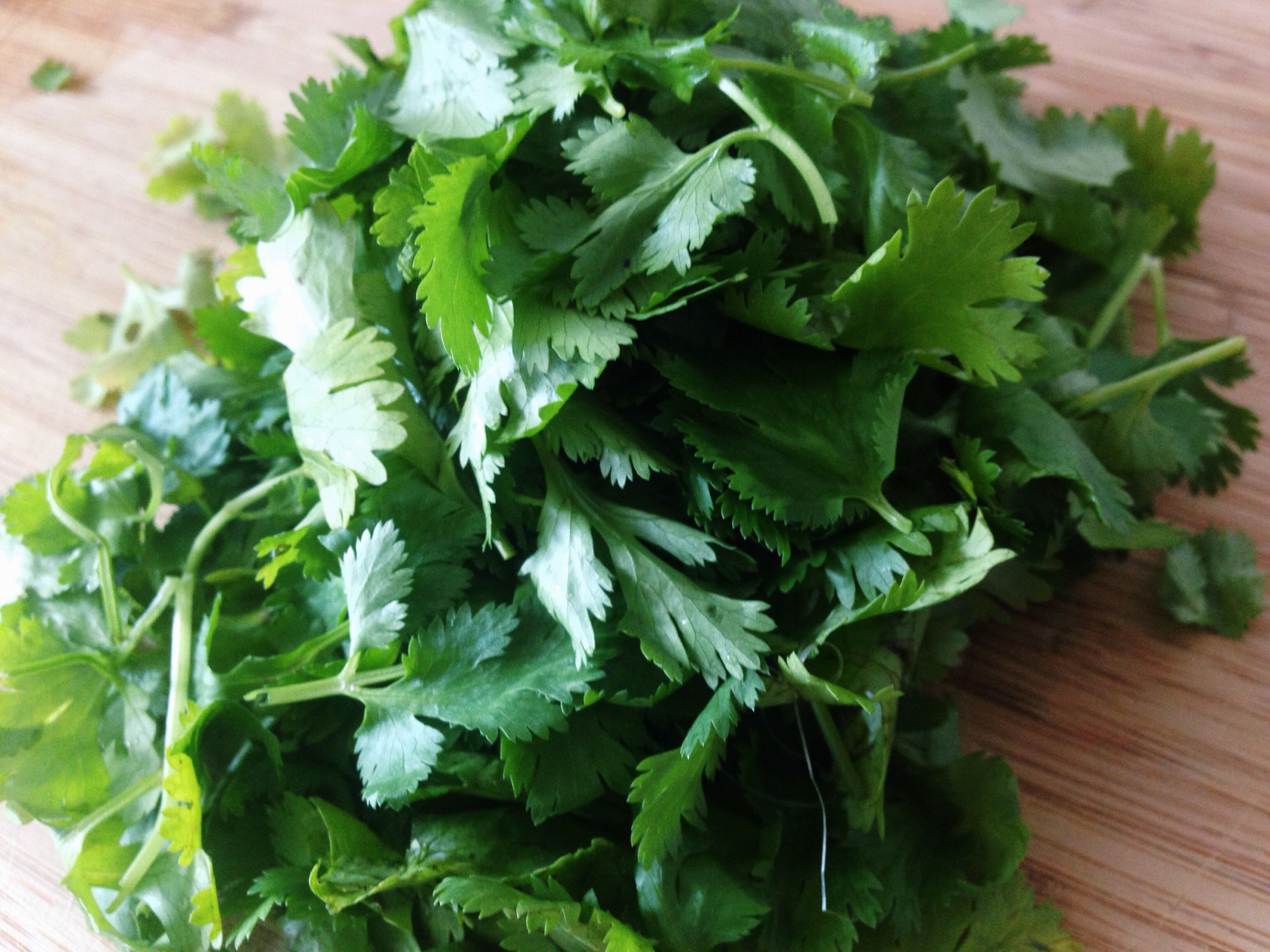 Trendy Parsley Can You Freeze Coriander Uk This Will Make You Feel Alive On So Many Salvaging Something Youwould Have Thrown Saving Having Cilantro No More Wasted Cilantro Your Biggest Grace Can You F houzz 01 Can You Freeze Cilantro