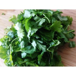Small Crop Of Can You Freeze Cilantro