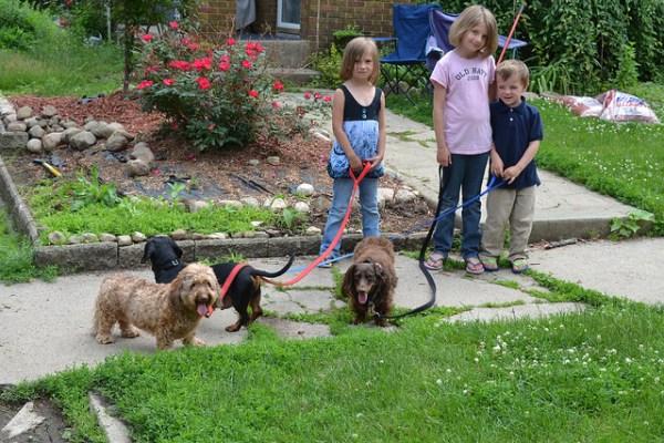 Kids Walking the Dogs