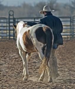 Dude Ranch Cowboy