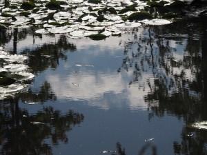 pond-1910372_640