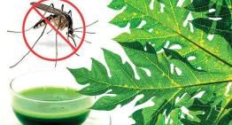 Surviving  Dengue Intelligently