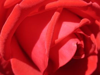 A Dozen Roses - Love Short Story