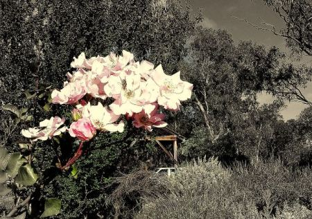 short-story-social-issue-flower-black-tree