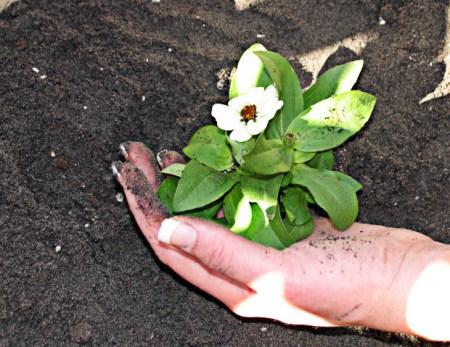new-plant-mud-hand