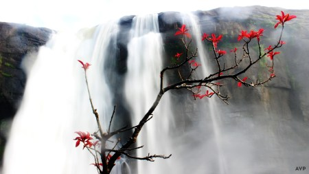 water-fall-flower