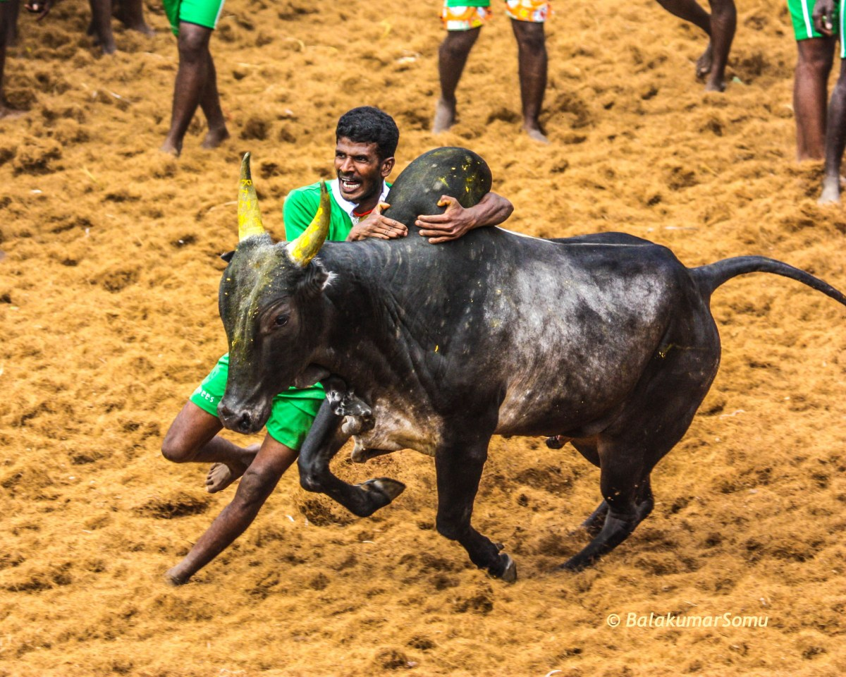 From fall of Olympics to Jallikattu ban