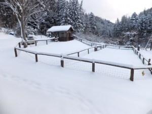 放牧場・大雪