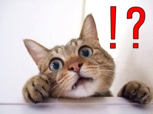 ネコ、驚き、びっくり