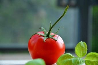 tomatoe-932737_640