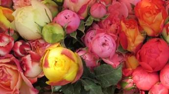 flowers-466331_640
