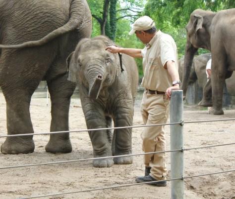 Elephants at the Tierpark Hagenbeck Zoo in Hamburg, Germany via ZaagiTravel.com