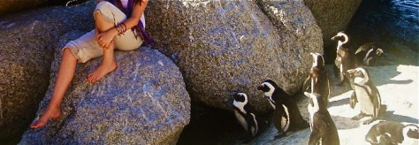 Penguins at Boulders Beach in Simon's Town, South Africa