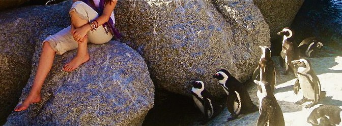 Penguin Colony at Boulders Beach in Simon's Town, South Africa