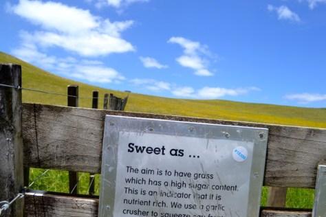 """Sweet As"" sign at Duder Regional Park in New Zealand via ZaagiTravel.com"