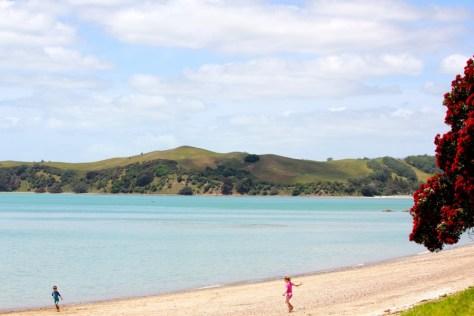 Pohutukawa tree and children playing on a Maraetai Coast beach in New Zealand via ZaagiTravel.com