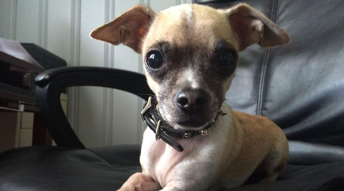 Meet-Duke