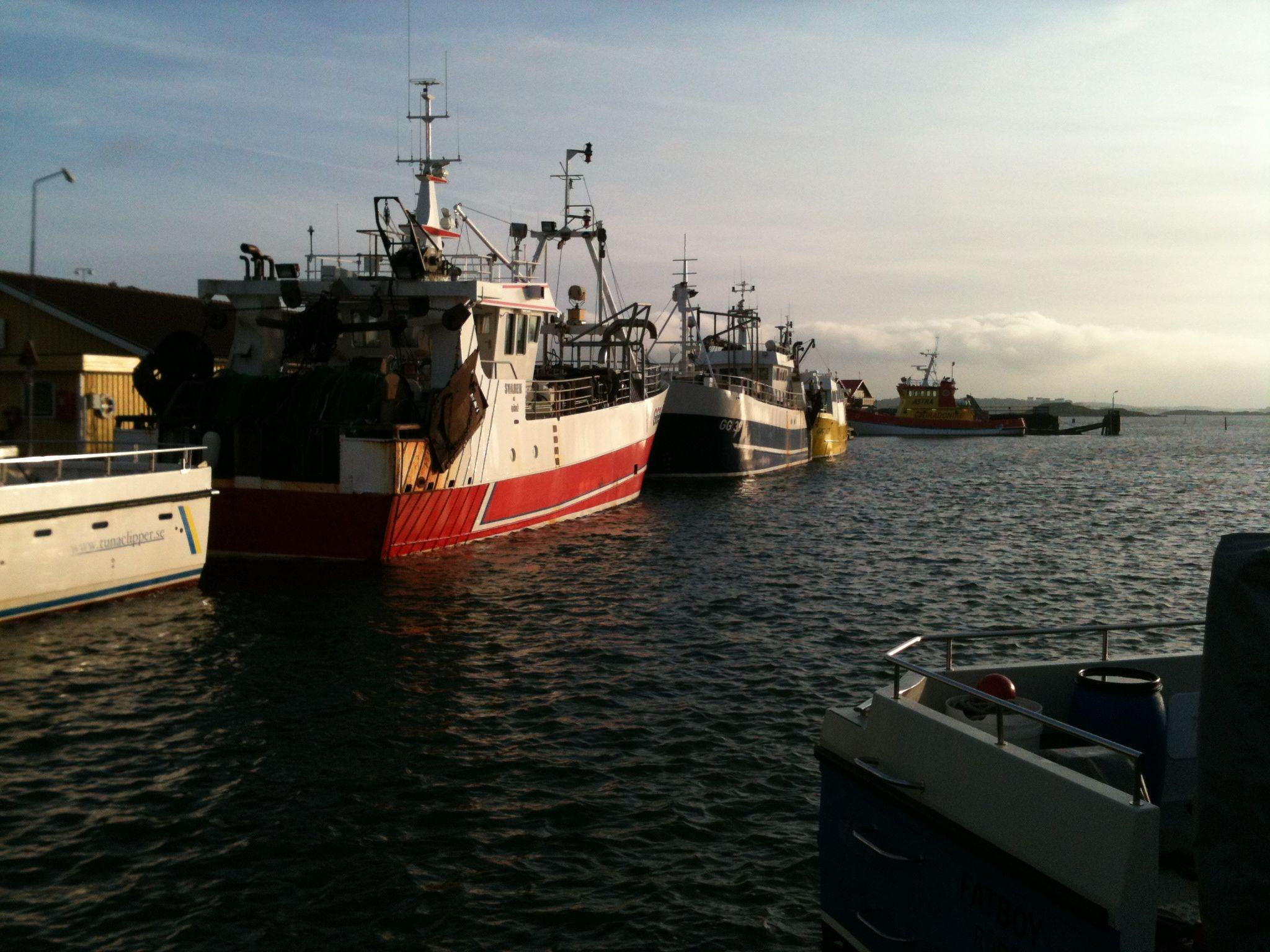 Några mindre fiskebåtar på Rörö