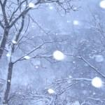 大雪の中の愛