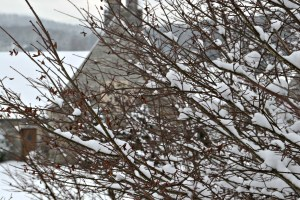 snowy scene #4