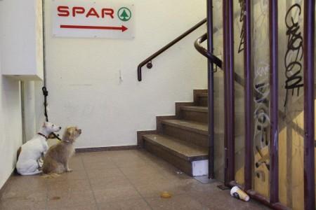 Spar Hunde