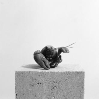 Der Sammler. Eine bebilderte Kurzgeschichte von Olivier Christe