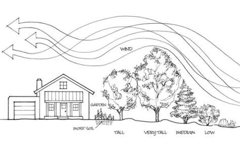 Planting a windbreak for energy efficiency