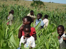 Climate change ignorance threatens food security in Zim