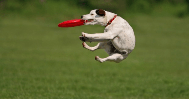 8 Dogs Who Love Going Above and Beyond Basic Fetch. Good Boys.