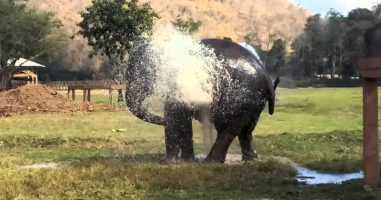 Elephant Breaks A Sprinkler And Does Exactly What You'd Expect An Elephant To Do!