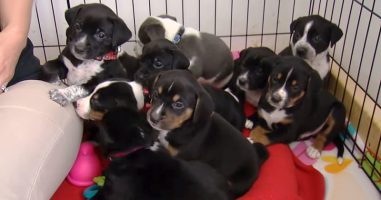 Her Dog Gave Birth To Puppies, But It's What She Named Them That Makes Them Special