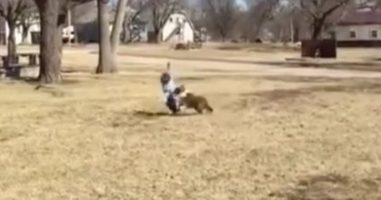This Dog Takes Family Baseball Games Way Too Seriously -- Calm Yourself!