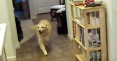 This Dog Does Something That Most Parents Can't Get Their Human Children To Do